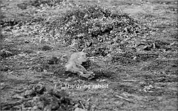 the dying rabbit.png